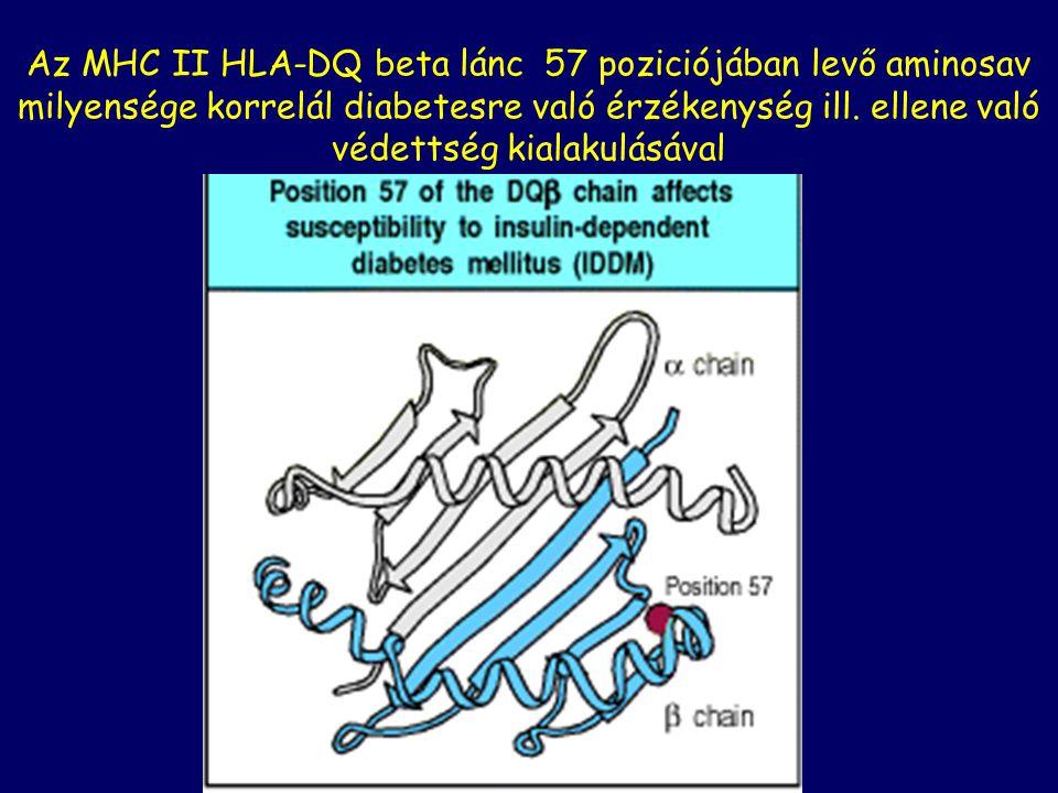 Az MHC II HLA-DQ beta lánc 57 poziciójában levő aminosav milyensége korrelál diabetesre való érzékenység ill. ellene való védettség kialakulásával