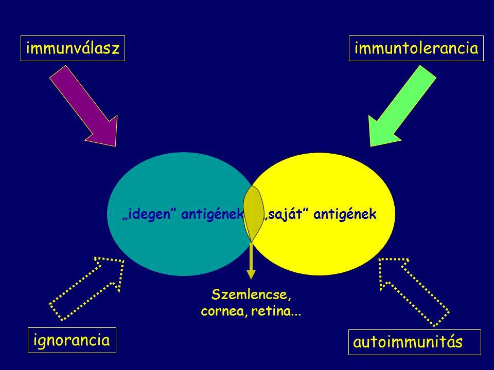 """immunválaszimmuntolerancia autoimmunitás ignorancia """"idegen antigének""""saját antigének Szemlencse, cornea, retina..."""