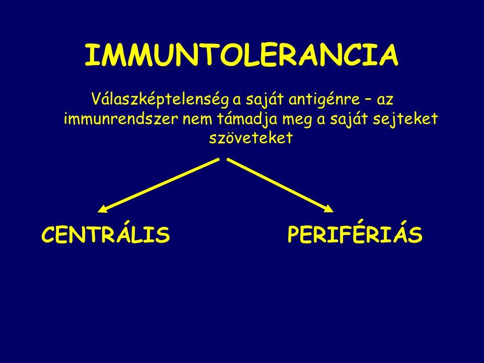 IMMUNTOLERANCIA Válaszképtelenség a saját antigénre – az immunrendszer nem támadja meg a saját sejteket szöveteket CENTRÁLIS PERIFÉRIÁS