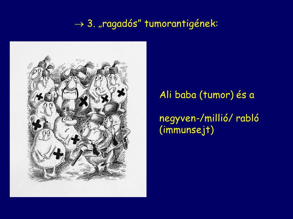 """Ali baba (tumor) és a negyven-/millió/ rabló (immunsejt)  3. """"ragadós tumorantigének:"""
