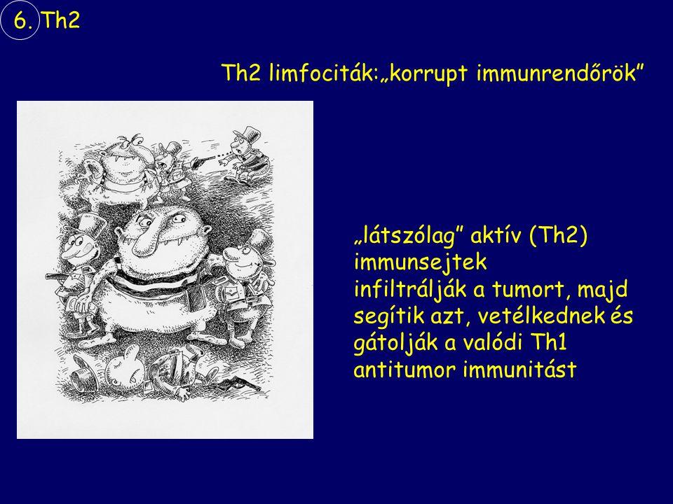 """""""látszólag aktív (Th2) immunsejtek infiltrálják a tumort, majd segítik azt, vetélkednek és gátolják a valódi Th1 antitumor immunitást Th2 limfociták:""""korrupt immunrendőrök 6."""