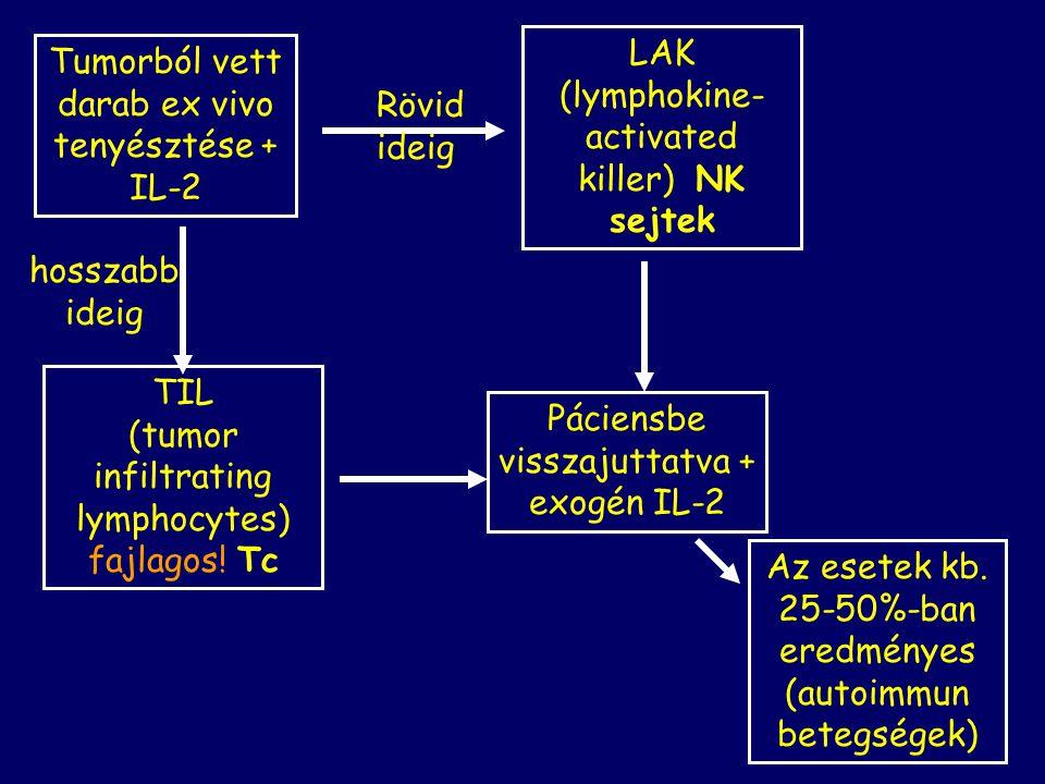 Páciensbe visszajuttatva + exogén IL-2 Tumorból vett darab ex vivo tenyésztése + IL-2 Rövid ideig LAK (lymphokine- activated killer) NK sejtek TIL (tumor infiltrating lymphocytes) fajlagos.