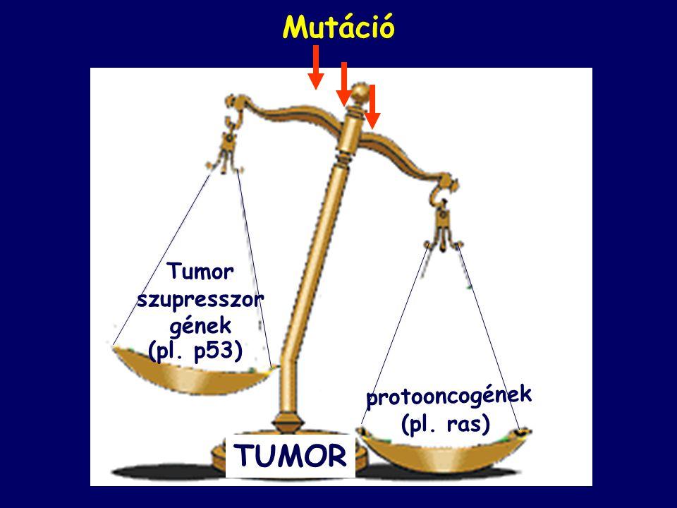 Mutáció protooncogének (pl. ras) Tumor szupresszor gének (pl. p53) TUMOR