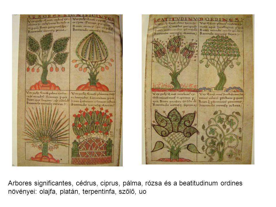 Arbores significantes, cédrus, ciprus, pálma, rózsa és a beatitudinum ordines növényei: olajfa, platán, terpentinfa, szőlő, uo