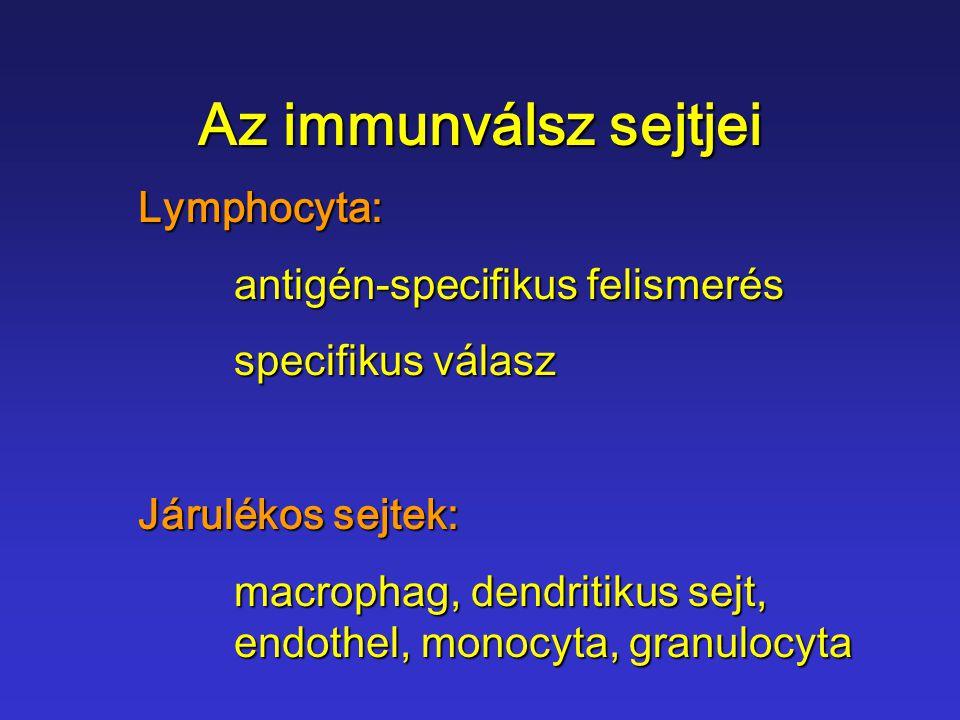 Haemopoetikus őssejt T C Ly T H Ly B Ly Plasmasejt Lymphoidelőalak NK Ly Myeloidelőalak Monocyta Macrophag BasophilGr.c.