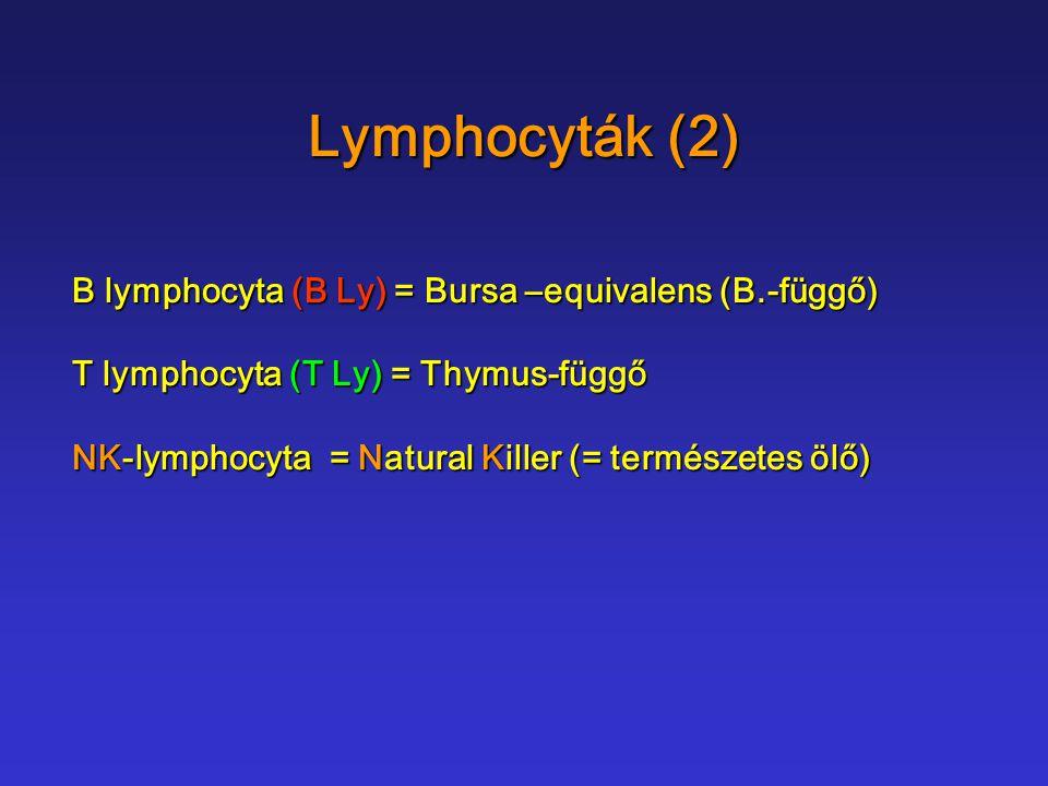 B-lymphocyta a lymphoid sejtek 5-10% -a a lymphoid sejtek 5-10% -a natív antigéneket ismernek fel natív antigéneket ismernek fel az immunoglobulint tartalmazó az immunoglobulint tartalmazó B-sejt receptorral (BCR B-sejt receptorral (BCR ) Ig M, Ig D (Ig G, Ig A, Ig E)