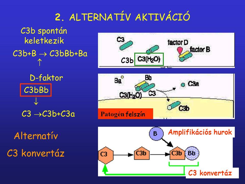 C1s  C4  C4b+C4a C1s  C2  C2b+C2a  C4b+C2b  C2bC4b C2bC4b  C3  C3b+C3a klasszikus C3 convertáz