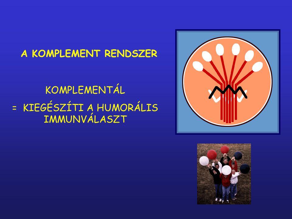 A KOMPLEMENT RENDSZER KOMPLEMENTÁL = KIEGÉSZÍTI A HUMORÁLIS IMMUNVÁLASZT