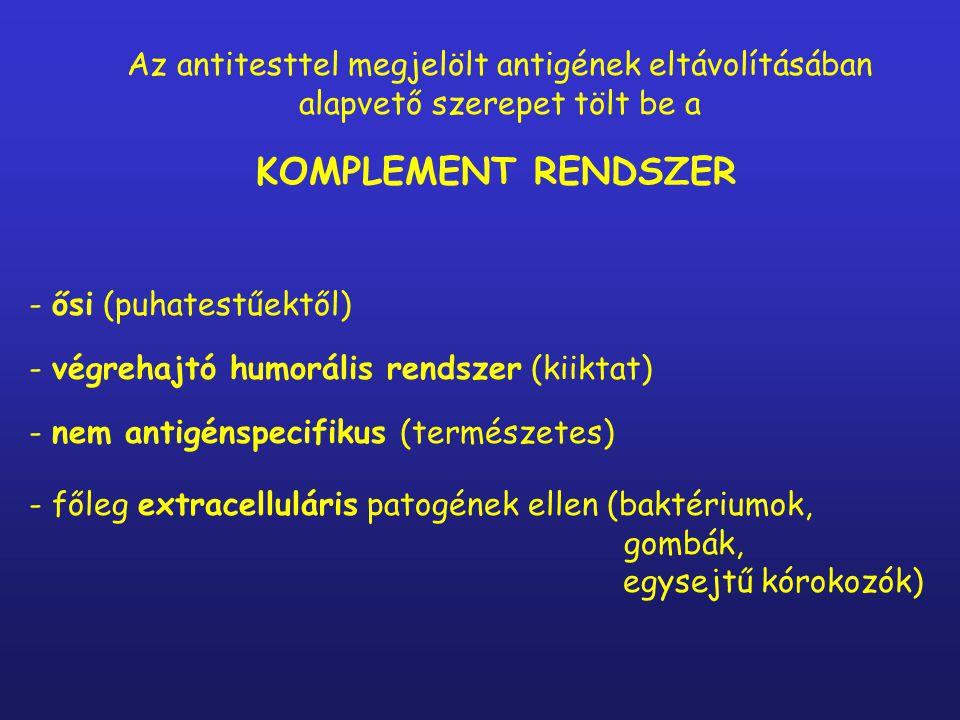 - ősi (puhatestűektől) - végrehajtó humorális rendszer (kiiktat) - nem antigénspecifikus (természetes) - főleg extracelluláris patogének ellen (baktériumok, gombák, egysejtű kórokozók) KOMPLEMENT RENDSZER Az antitesttel megjelölt antigének eltávolításában alapvető szerepet tölt be a