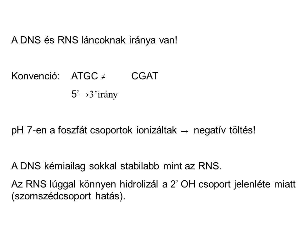 A DNS és RNS láncoknak iránya van! Konvenció: ATGC ≠ CGAT 5' →3'irány pH 7-en a foszfát csoportok ionizáltak → negatív töltés! A DNS kémiailag sokkal