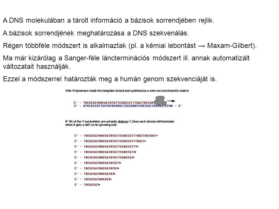 A DNS molekulában a tárolt információ a bázisok sorrendjében rejlik. A bázisok sorrendjének meghatározása a DNS szekvenálás. Régen többféle módszert i