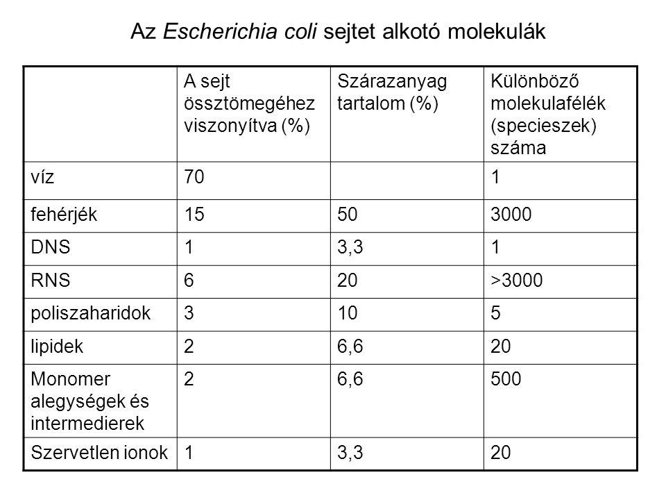 Az Escherichia coli sejtet alkotó molekulák A sejt össztömegéhez viszonyítva (%) Szárazanyag tartalom (%) Különböző molekulafélék (specieszek) száma v