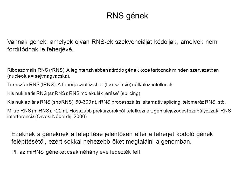 RNS gének Vannak gének, amelyek olyan RNS-ek szekvenciáját kódolják, amelyek nem fordítódnak le fehérjévé. Riboszómális RNS (rRNS): A legintenzívebben