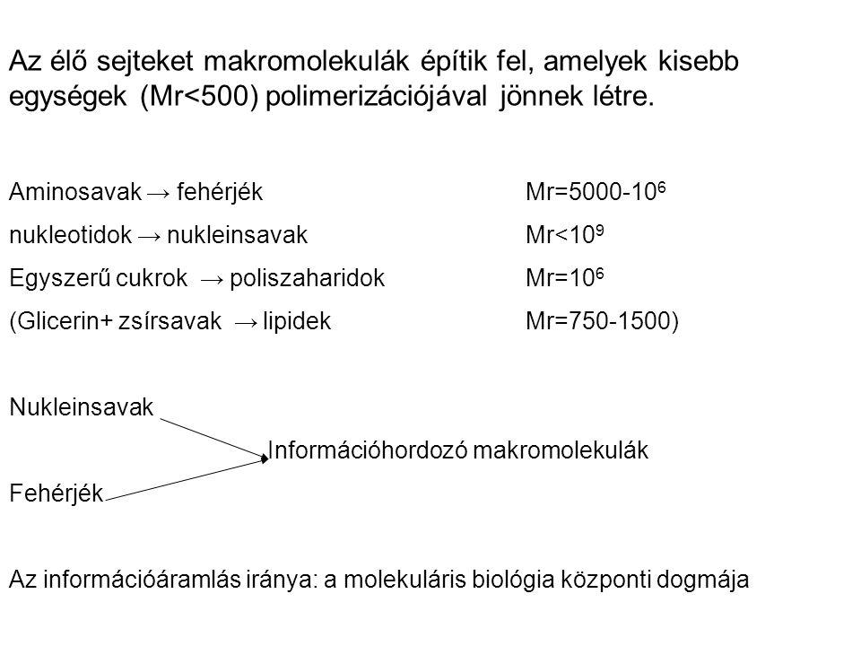 Az élő sejteket makromolekulák építik fel, amelyek kisebb egységek (Mr<500) polimerizációjával jönnek létre. Aminosavak → fehérjék Mr=5000-10 6 nukleo