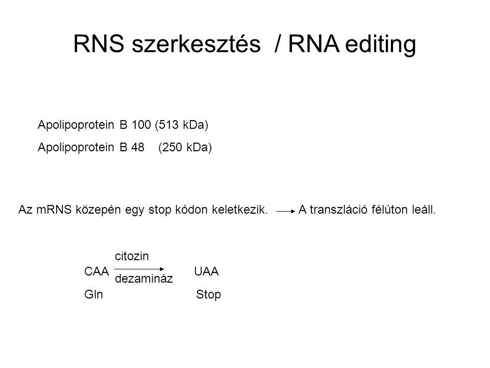 RNS szerkesztés / RNA editing Apolipoprotein B 100 (513 kDa) Apolipoprotein B 48 (250 kDa) Az mRNS közepén egy stop kódon keletkezik. A transzláció fé