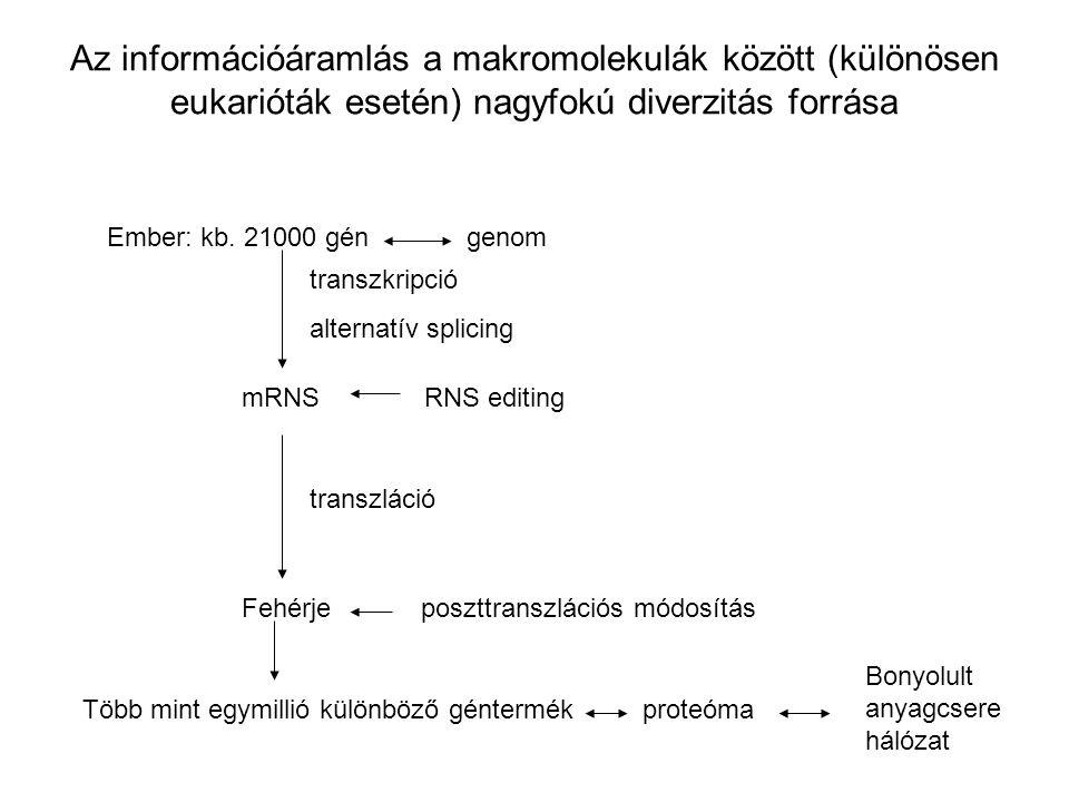 Az információáramlás a makromolekulák között (különösen eukarióták esetén) nagyfokú diverzitás forrása Ember: kb. 21000 gén genom transzkripció altern