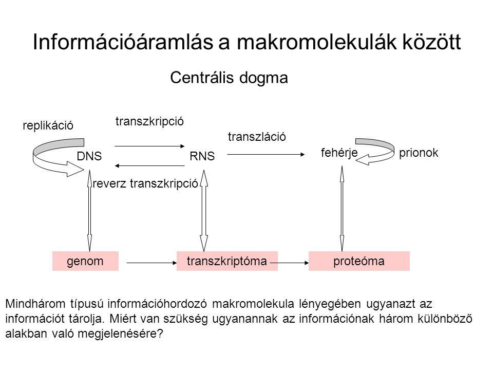 Információáramlás a makromolekulák között Centrális dogma DNSRNS fehérje genomtranszkriptómaproteóma transzkripció transzláció replikáció reverz trans