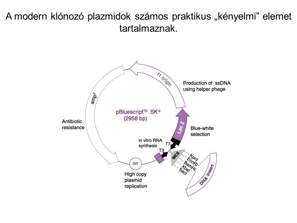 """A modern klónozó plazmidok számos praktikus """"kényelmi"""" elemet tartalmaznak."""