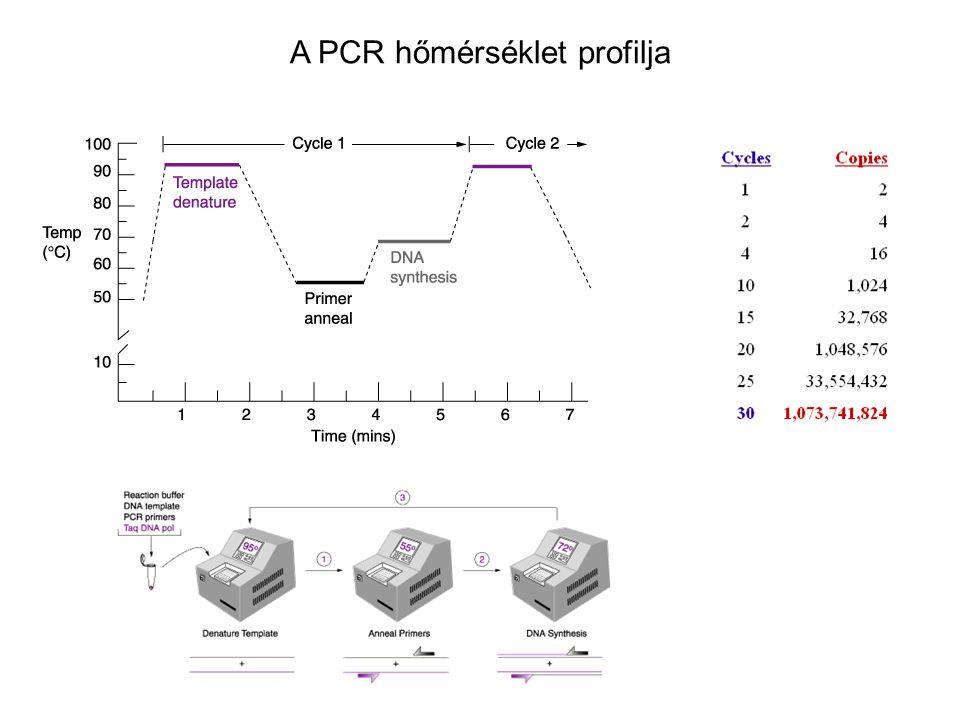 A PCR hőmérséklet profilja
