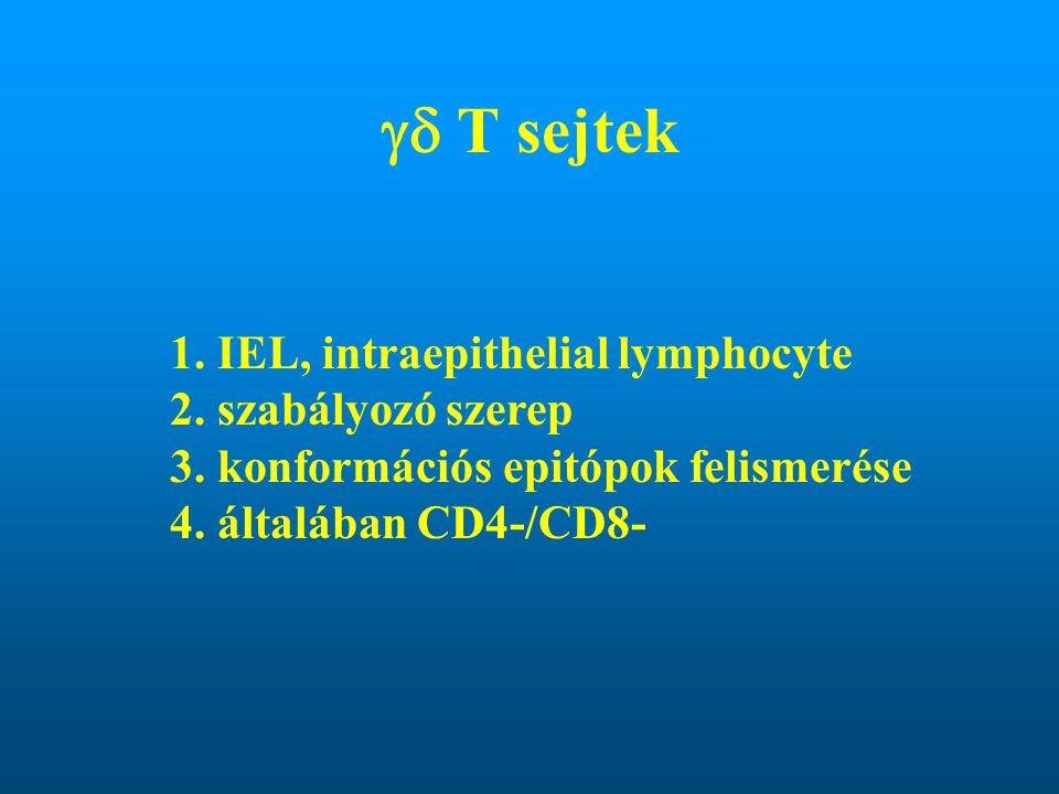  T sejtek 1. IEL, intraepithelial lymphocyte 2. szabályozó szerep 3. konformációs epitópok felismerése 4. általában CD4-/CD8-