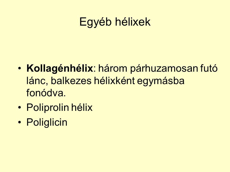 Egyéb hélixek Kollagénhélix: három párhuzamosan futó lánc, balkezes hélixként egymásba fonódva. Poliprolin hélix Poliglicin