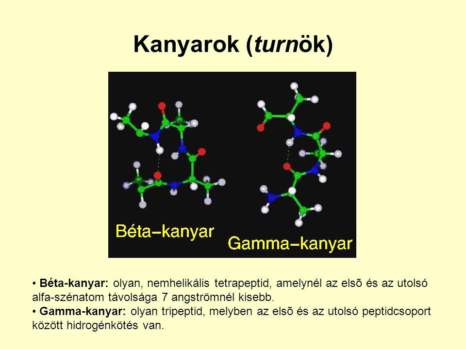 Kanyarok (turnök) Béta-kanyar: olyan, nemhelikális tetrapeptid, amelynél az elsõ és az utolsó alfa-szénatom távolsága 7 angströmnél kisebb. Gamma-kany