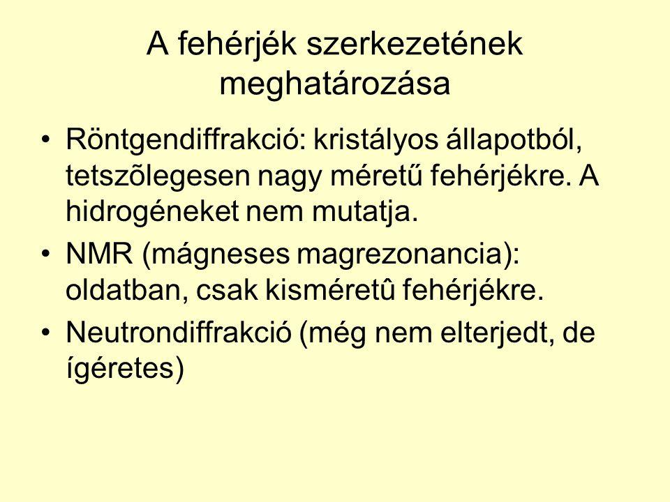 A fehérjék szerkezetének meghatározása Röntgendiffrakció: kristályos állapotból, tetszõlegesen nagy méretű fehérjékre. A hidrogéneket nem mutatja. NMR