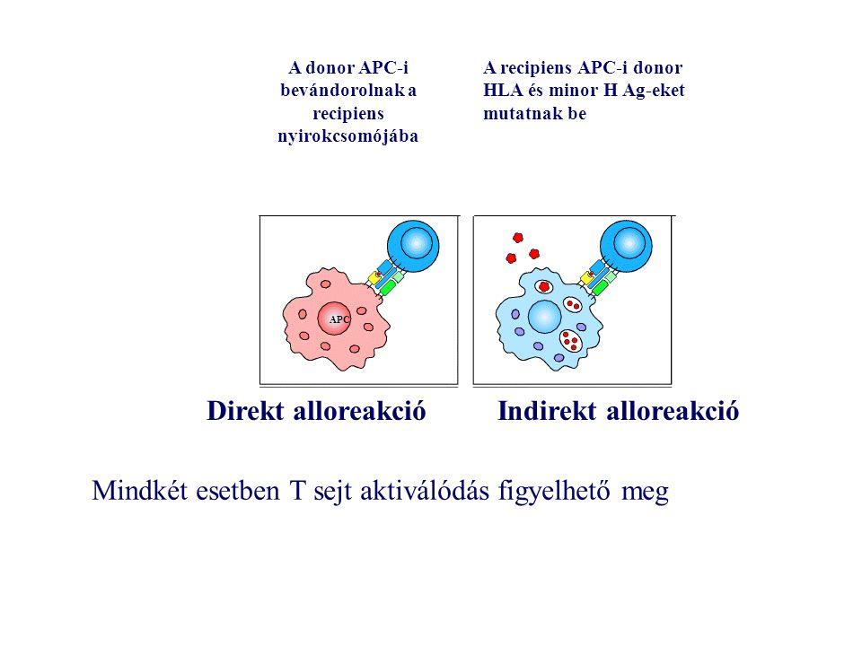 Direkt alloreakcióIndirekt alloreakció A donor APC-i bevándorolnak a recipiens nyirokcsomójába A recipiens APC-i donor HLA és minor H Ag-eket mutatnak