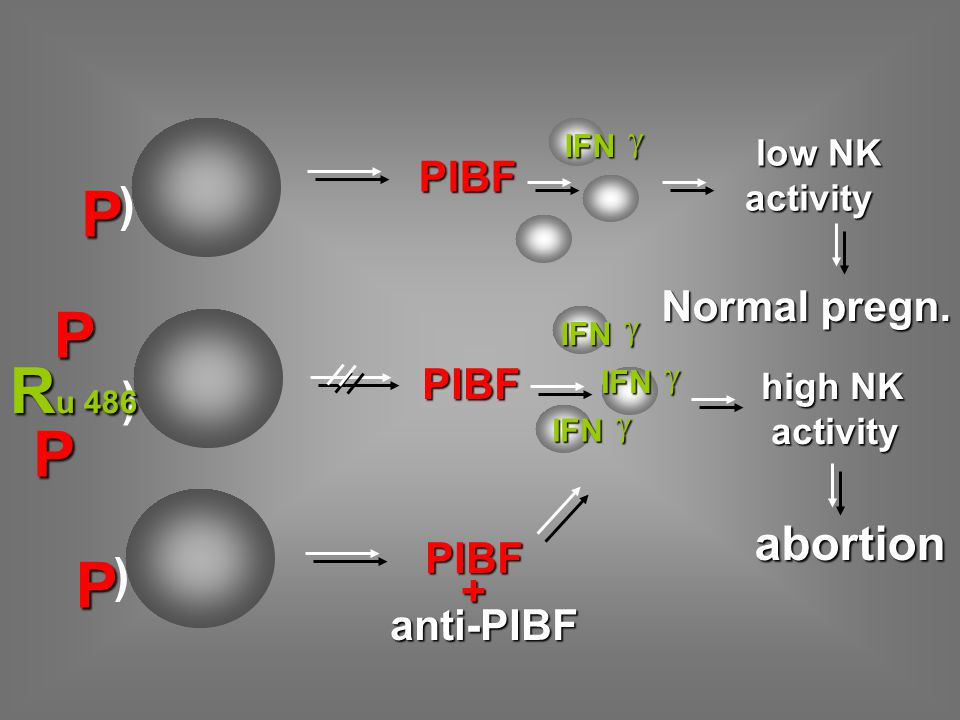 ) P PIBF low NK low NKactivity high NK activity activity Normal pregn. abortion PIBF ) ) P R u 486 P P IFN  IFN  IFN  IFN  PIBF PIBF +anti-PIBF