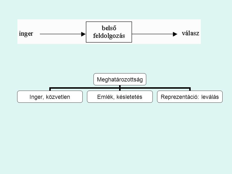A négyféle intelligencia és a közöttük érvényes áthallások Mithen felfogásában