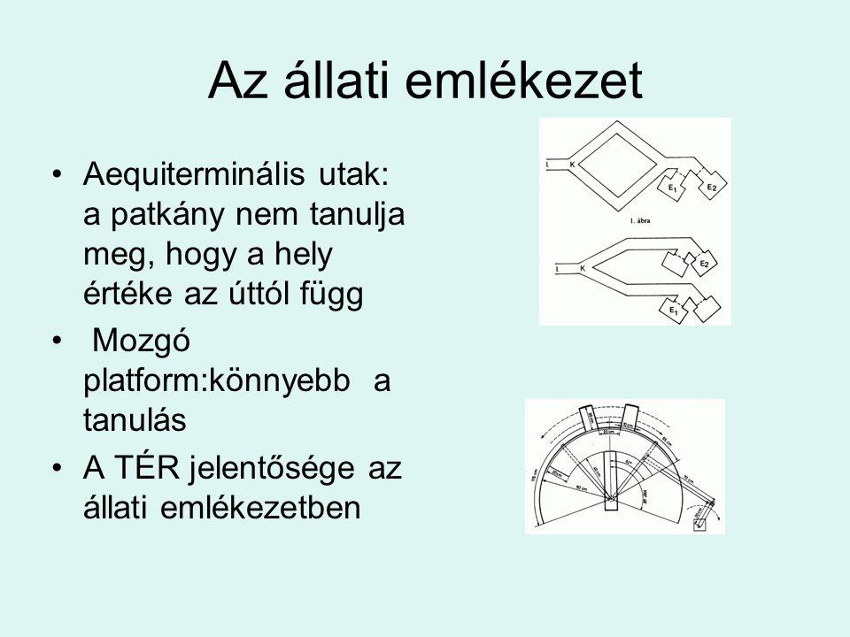 Az állati emlékezet Aequiterminális utak: a patkány nem tanulja meg, hogy a hely értéke az úttól függ Mozgó platform:könnyebb a tanulás A TÉR jelentős