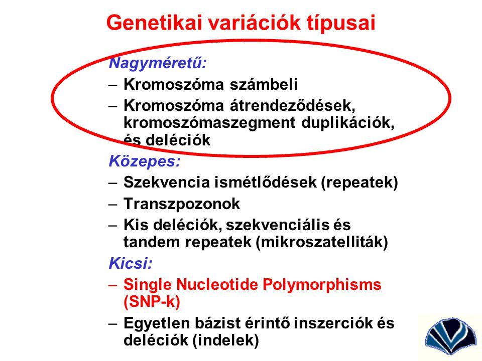 Homológ kromoszómák duplikációja és deléciója egyenlőtlen crossing over következtében