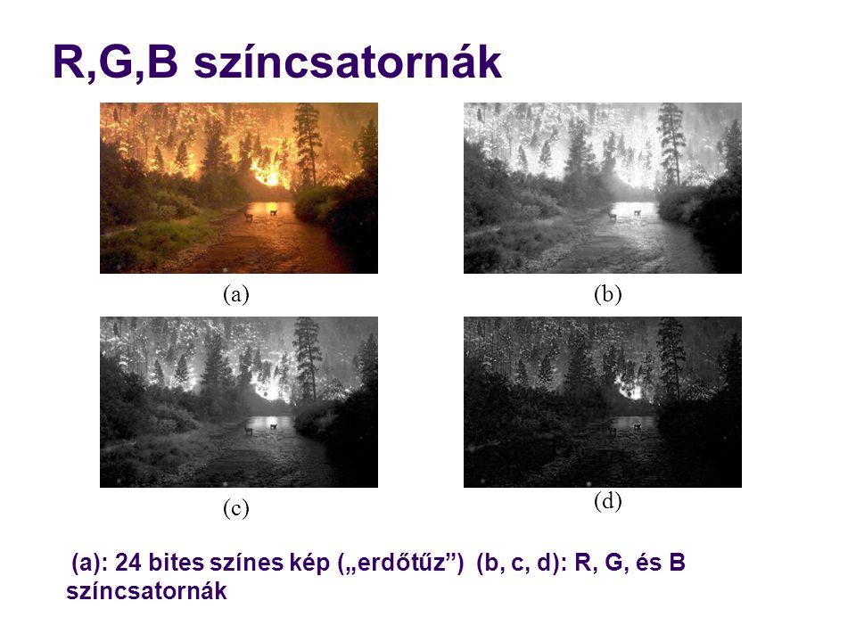 """R,G,B színcsatornák (a): 24 bites színes kép (""""erdőtűz"""") (b, c, d): R, G, és B színcsatornák (a) (c) (b) (d)"""