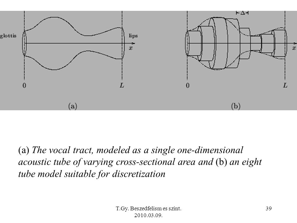 T.Gy. Beszedfelism es szint. 2010.03.09. 39 (a) The vocal tract, modeled as a single one-dimensional acoustic tube of varying cross-sectional area and