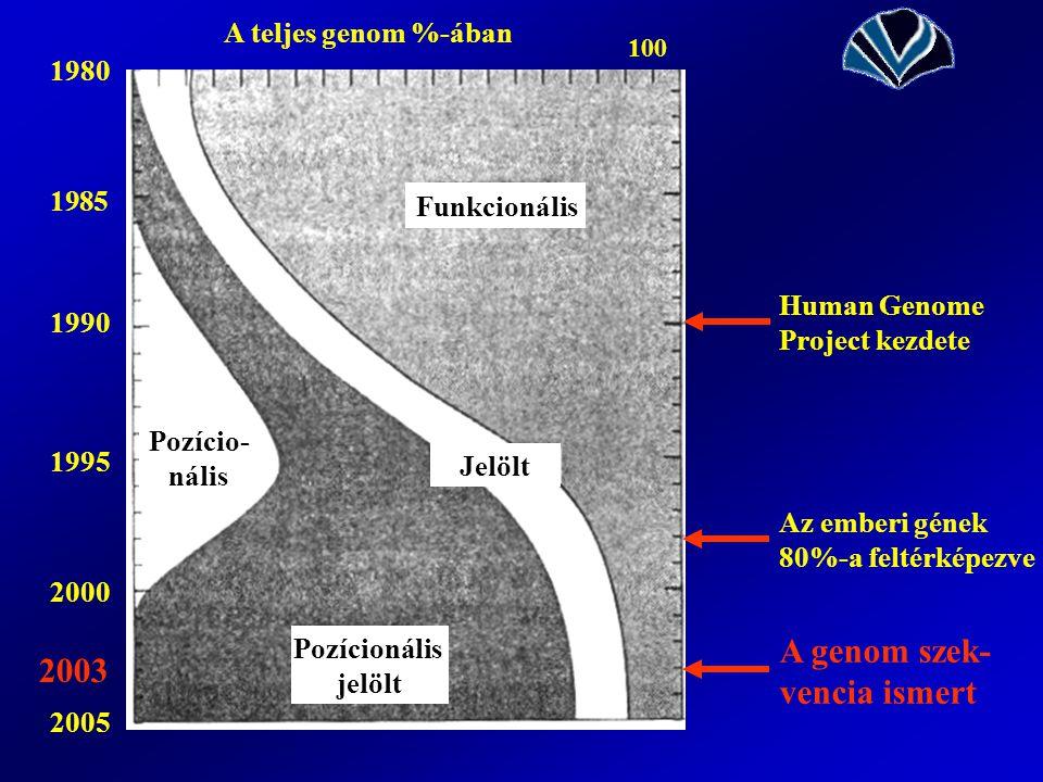 o 19 80 Pozício- nális Pozícionális jelölt Jelölt Funkcionális A teljes genom %-ában 100 1985 1990 1995 1980 2000 2005 2003 Human Genome Project kezdete Az emberi gének 80%-a feltérképezve A genom szek- vencia ismert