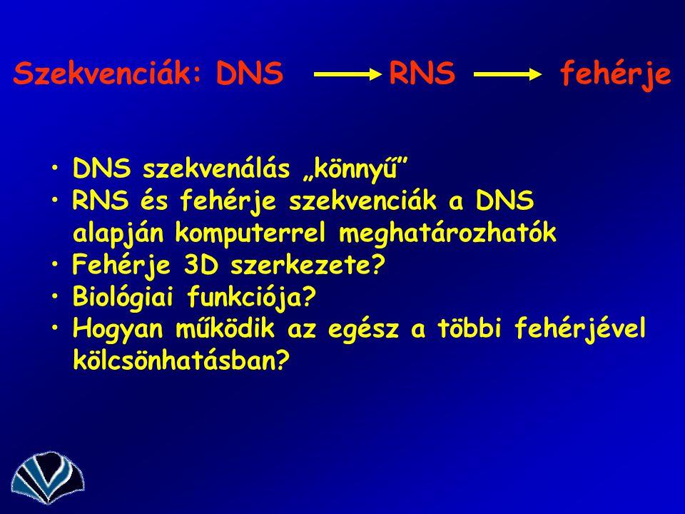 """Szekvenciák: DNS RNS fehérje DNS szekvenálás """"könnyű RNS és fehérje szekvenciák a DNS alapján komputerrel meghatározhatók Fehérje 3D szerkezete."""