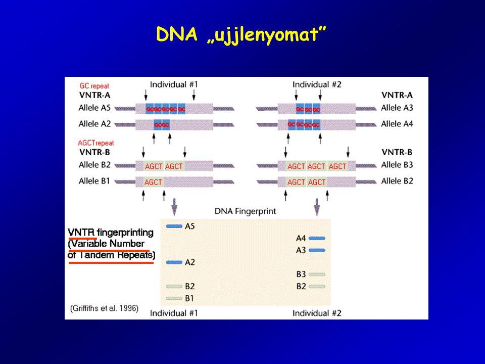 """DNA """"ujjlenyomat"""""""
