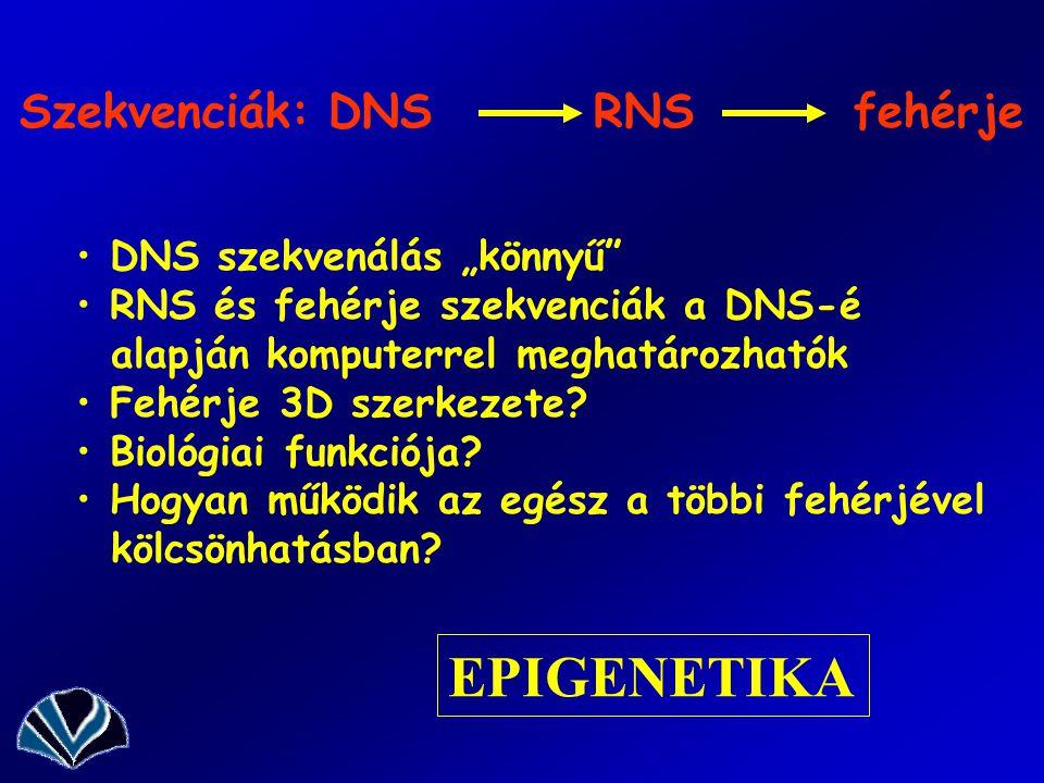 """Szekvenciák: DNS RNS fehérje DNS szekvenálás """"könnyű"""" RNS és fehérje szekvenciák a DNS-é alapján komputerrel meghatározhatók Fehérje 3D szerkezete? Bi"""