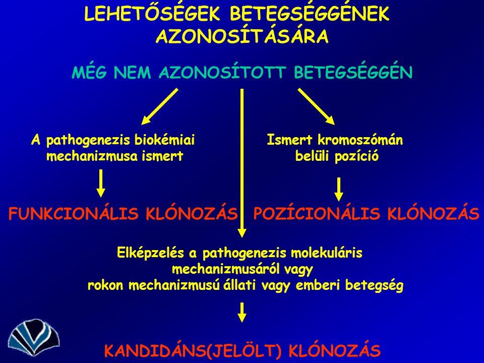 LEHETŐSÉGEK BETEGSÉGGÉNEK AZONOSÍTÁSÁRA MÉG NEM AZONOSÍTOTT BETEGSÉGGÉN A pathogenezis biokémiai mechanizmusa ismert Ismert kromoszómán belüli pozíció FUNKCIONÁLIS KLÓNOZÁSPOZÍCIONÁLIS KLÓNOZÁS Elképzelés a pathogenezis molekuláris mechanizmusáról vagy rokon mechanizmusú állati vagy emberi betegség KANDIDÁNS(JELÖLT) KLÓNOZÁS