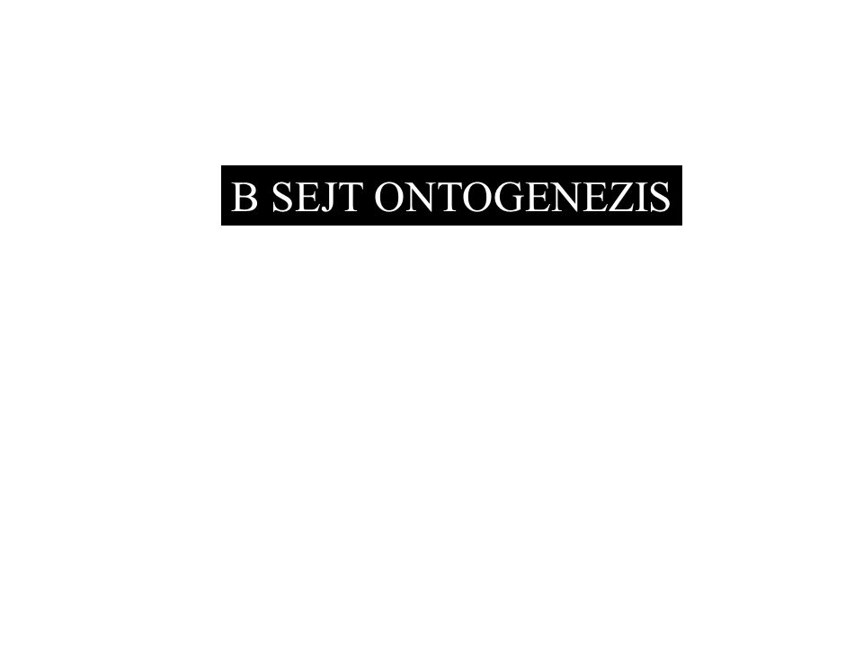 B SEJT ONTOGENEZIS