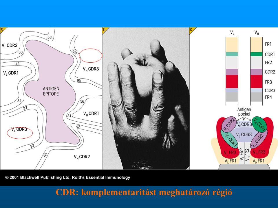 CDR: komplementaritást meghatározó régió