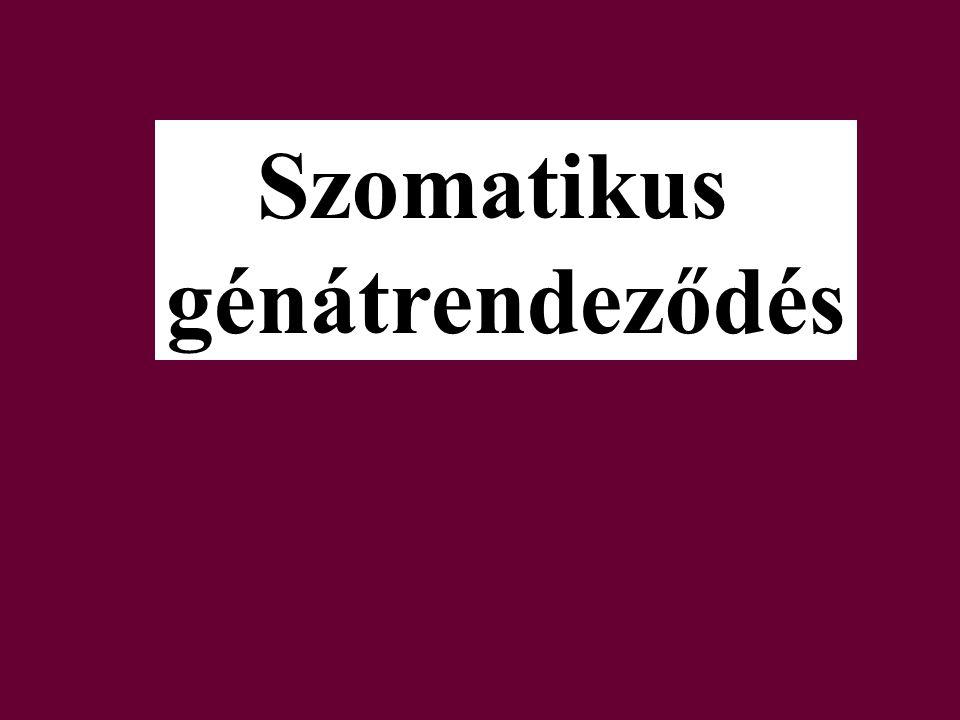 Szomatikus génátrendeződés