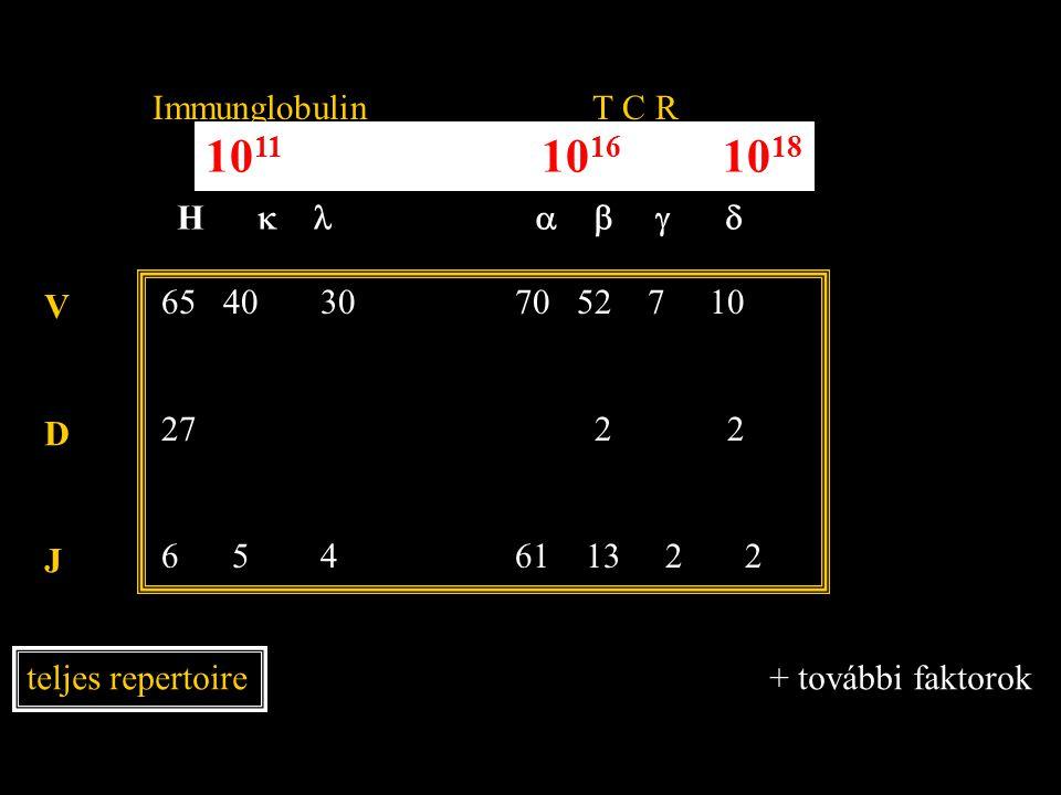 H   Immunglobulin T C R VDJVDJ teljes repertoire 10 11 10 16 10 18 65 40 30 70 52 7 10 27 2 2 6 5 4 61 13 2 2 + további faktorok