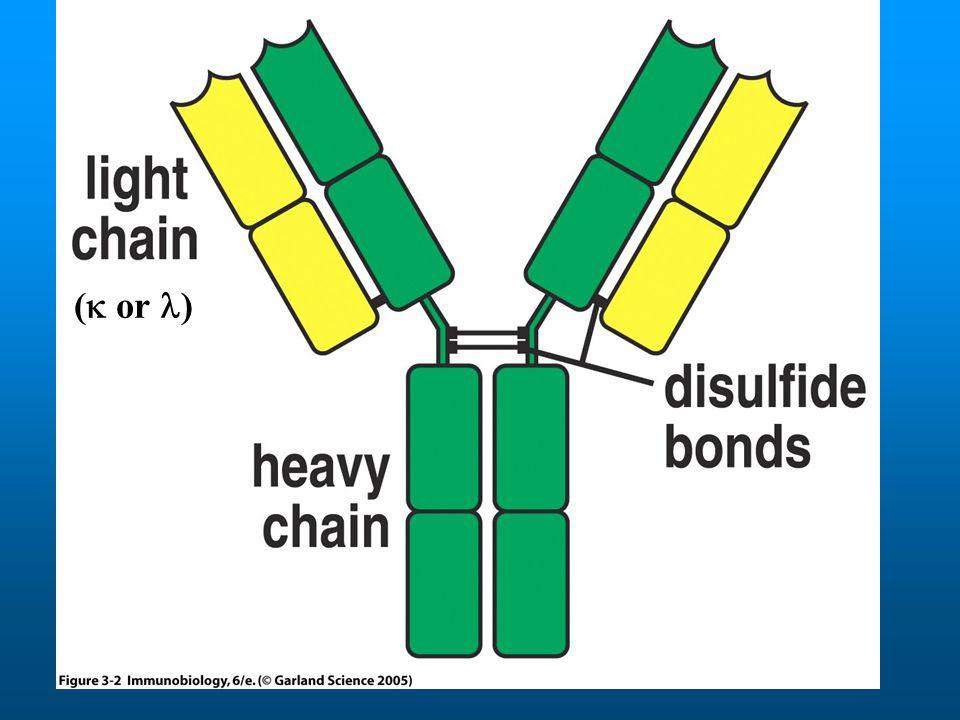 Junkcionális diverzitás 1)Nukleotid hozzáadása 2) Nukleotid deléció 3) Néhány D szegmens 3 leolvasási kerettel olvasható VDJ Junkció (=CDR3 in Ab)