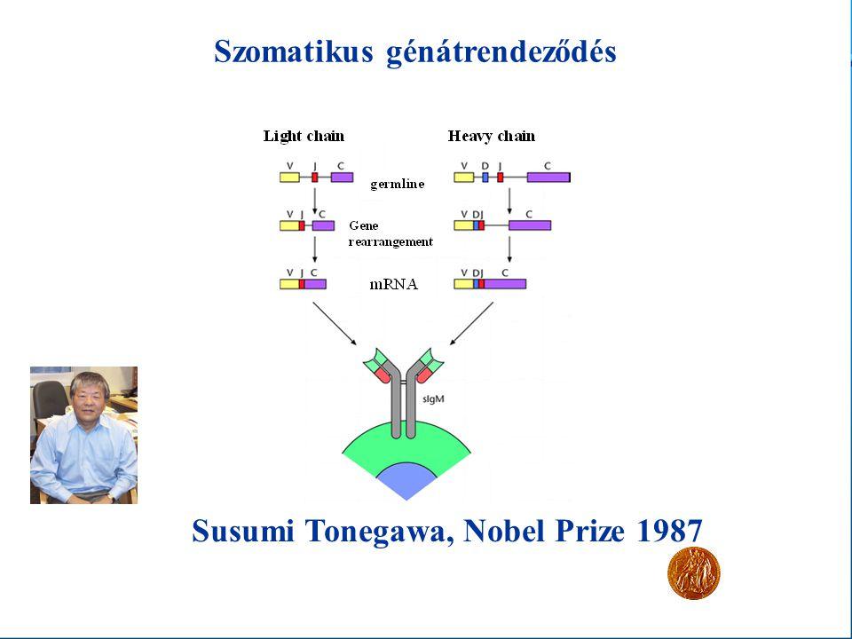 Szomatikus génátrendeződés Susumi Tonegawa, Nobel Prize 1987