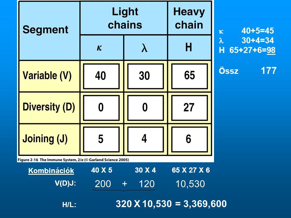 Kombinációk 40 X 530 X 4 65 X 27 X 6 200 + 12010,530 320 10,530X= 3,369,600 V(D)J: H/L:  40+5=45  30+4=34 H 65+27+6=98 Össz 177