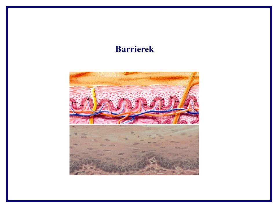 hámsérülés barrier www.sirinet.net/~jgjohnso/ inflamresponse4.jpg ábra alapján