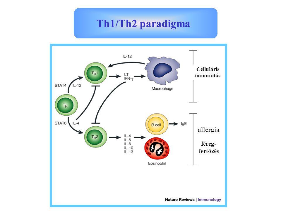 Celluláris immunitás allergia féreg- fertőzés Th1/Th2 paradigma