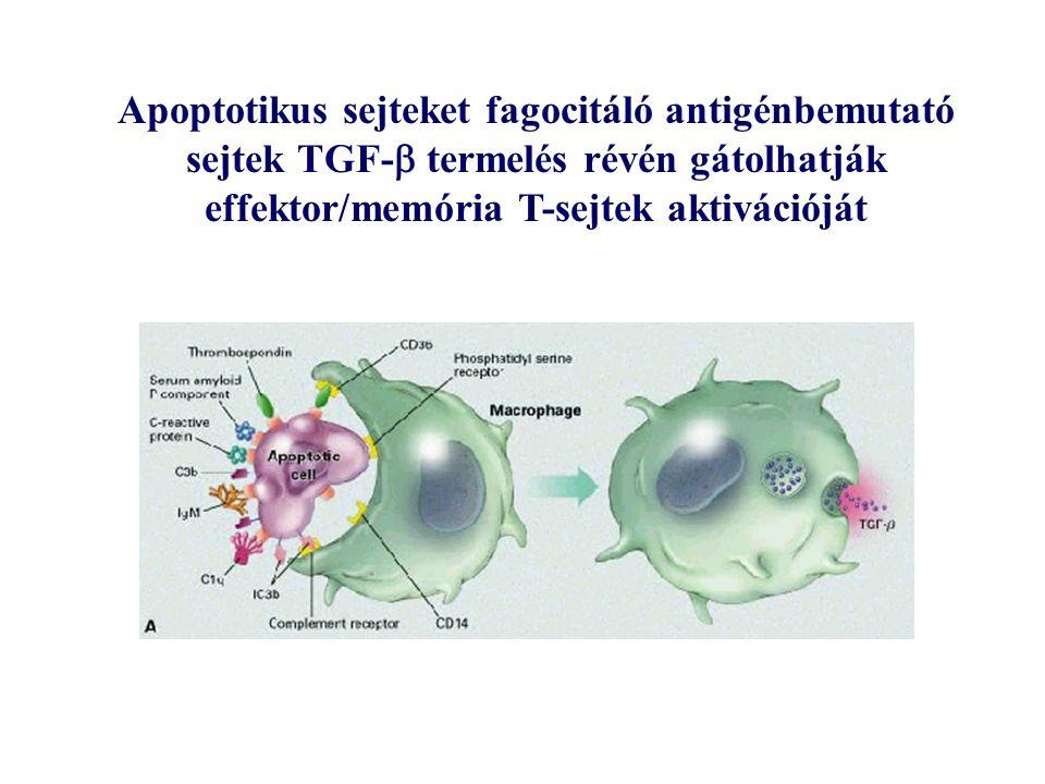 Apoptotikus sejteket fagocitáló antigénbemutató sejtek TGF-  termelés révén gátolhatják effektor/memória T-sejtek aktivációját