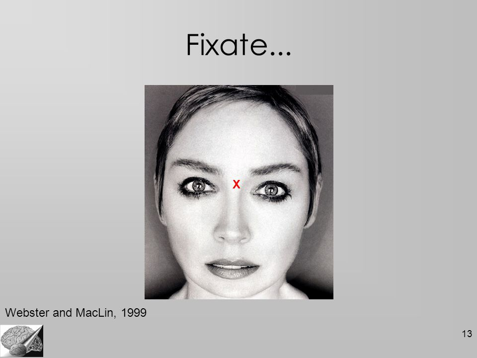13 Fixate... X Webster and MacLin, 1999
